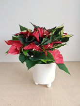 Load image into Gallery viewer, White Glitter Poinsettia