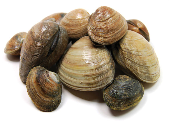 Frozen Whole Clams 1kg