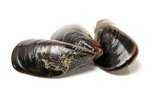 South African Full Shell Mussels - 900g (Frozen)
