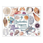 Beachcomber's Companion Notecards Assortment by Sarah McMenemy