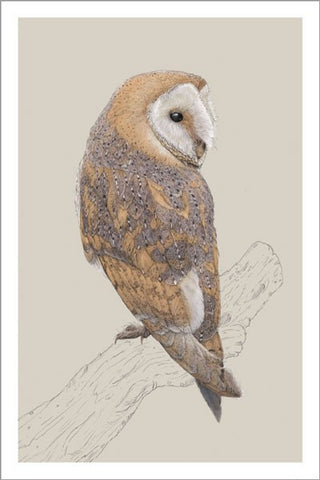 Owl Notecards - Box of 10 Notecards + Envelopes