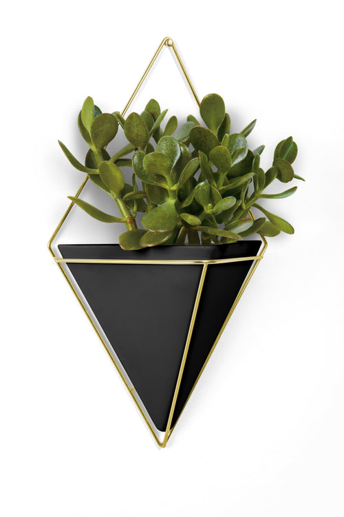 Wall Planters | color: Black-Brass
