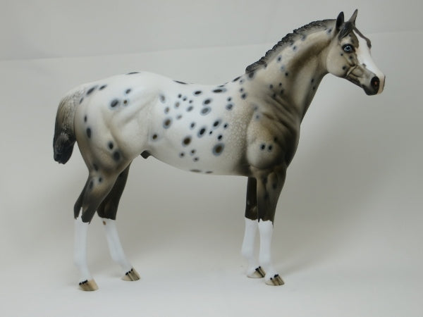 GOT SPOTS - Ratty Mane Appaloosa with Variation of Face Marking LE10 2/15