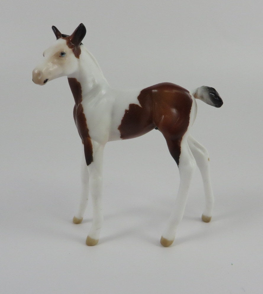 TOM THUMB-LE-10 PINTO FOAL CHIP LHS 2019