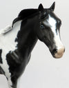 BLUE EYED JAC-OOAK MAPPED BLACK & WHITE TOVERO ISH MODEL HORSE BY DAWN QUICK 02/22/17