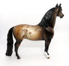 HEZA MORGAN-OOAK BAY APPALOOSA MORGAN MODEL HORSE BY DAWN QUICK 03/01/17