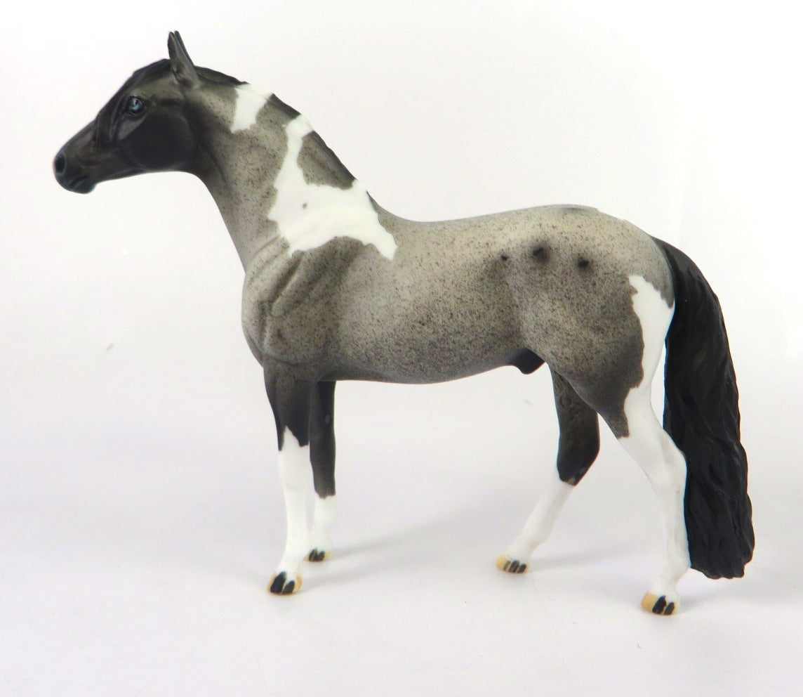 MINI ME BLUE CHRISTMAS - LE-10 BLUE ROAN PAINT ANDALUSIAN CHIP BY DAWN QUICK WHS 19