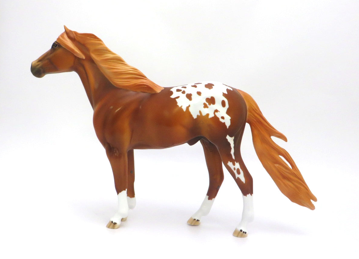 PAW PAW -- LE-5 BLANKET CHESTNUT APPALOOSA  MUSTANG  BY DAWN QUICK EA/MW 20