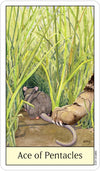 Cats Eye Tarot