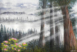 Foggy Redwoods and Rhododendrons - Kim Reid