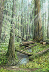 Old Growth Bridges - Kim Reid
