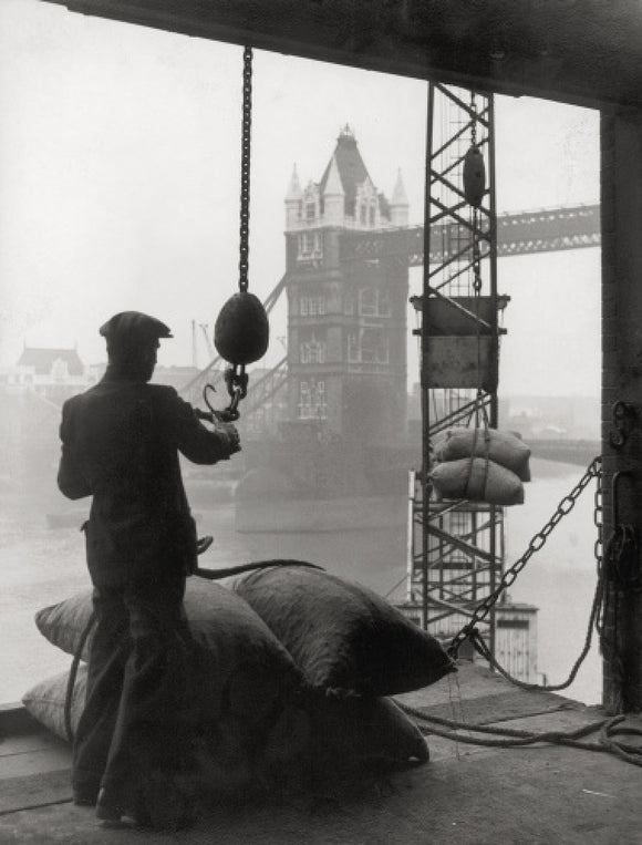 Pool of London Dockworker handling a cargo of bagged nuts 1947.