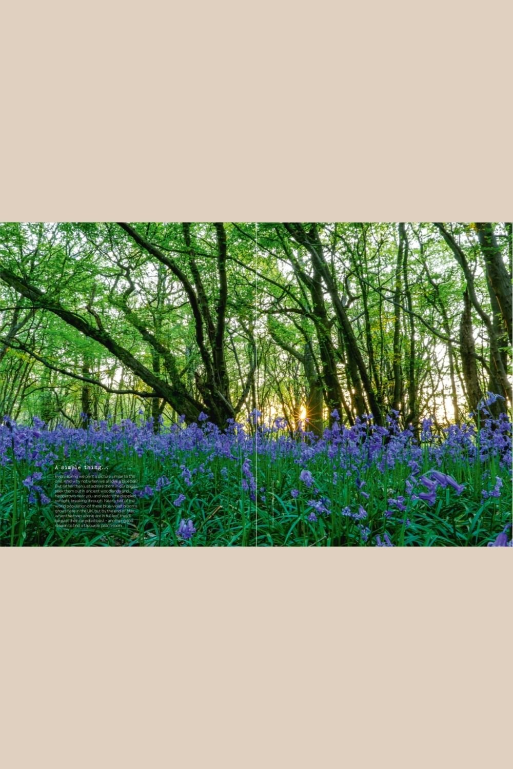 A Simple Thing - Bluebell Field