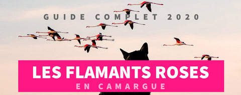 Guide Flamant Rose Camargue 2020