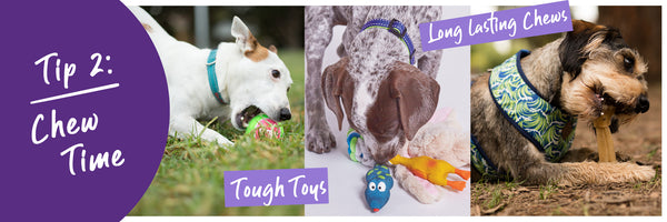 dog Kazoo chewing toys and treats