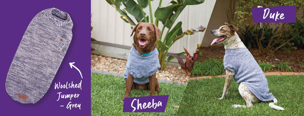 two large dogs in grey kazoo woodshed dog jumper