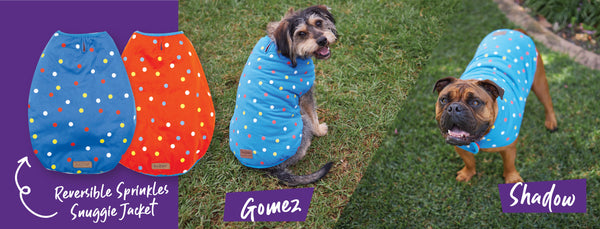Two dogs in spotty red and blue reversible kazoo snuggie jackets