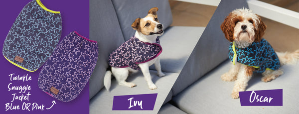 two small dogs in star patterned kazoo twinkle snuggie dog jacket