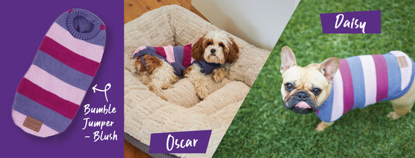 two small dogs in striped pink kazoo bumble dog jumper