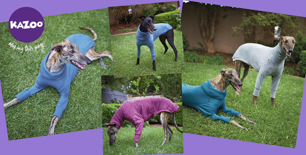 Kazoo greyhound jumpers on dogs