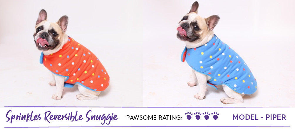 French Bulldog in red and blue spotty dog coat