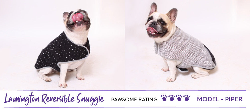 French bulldog in black and white reversible dog coat