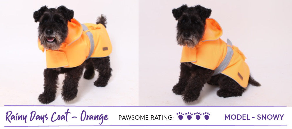 Black schnauzer dog wearing bright neon orange dog raincoat
