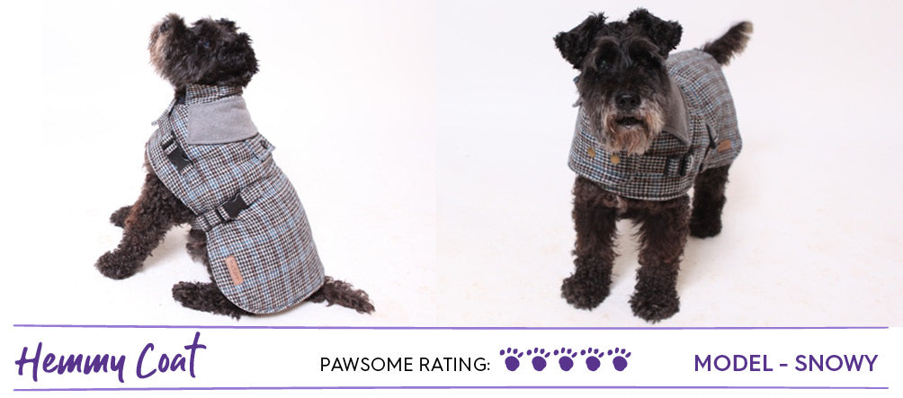 Black schnauzer dog wearing tweed style dog coat in grey