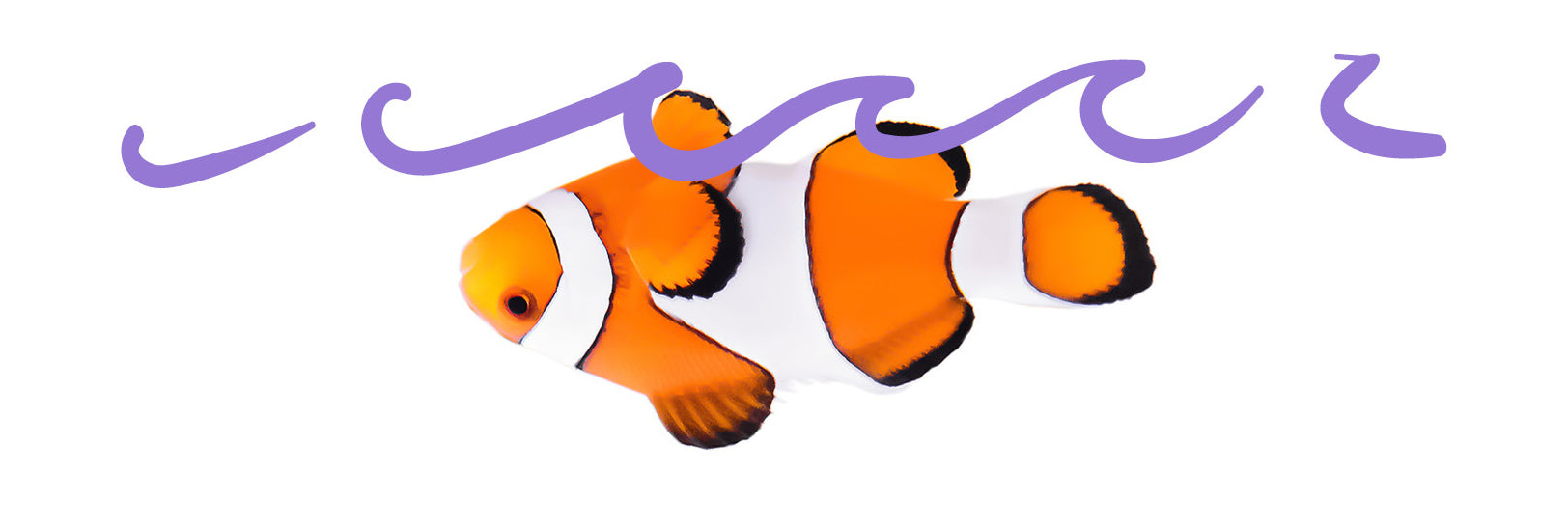 clown fish floating upside down