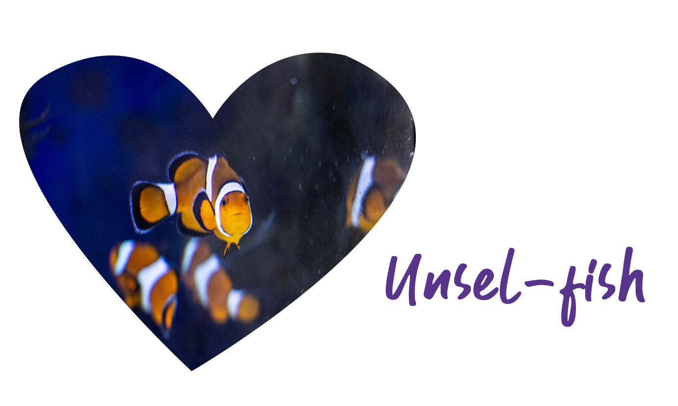 clown fish swimming in fish tank scene cut out in heart shape