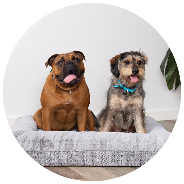Two dogs sitting up in grey mattress style dog bed
