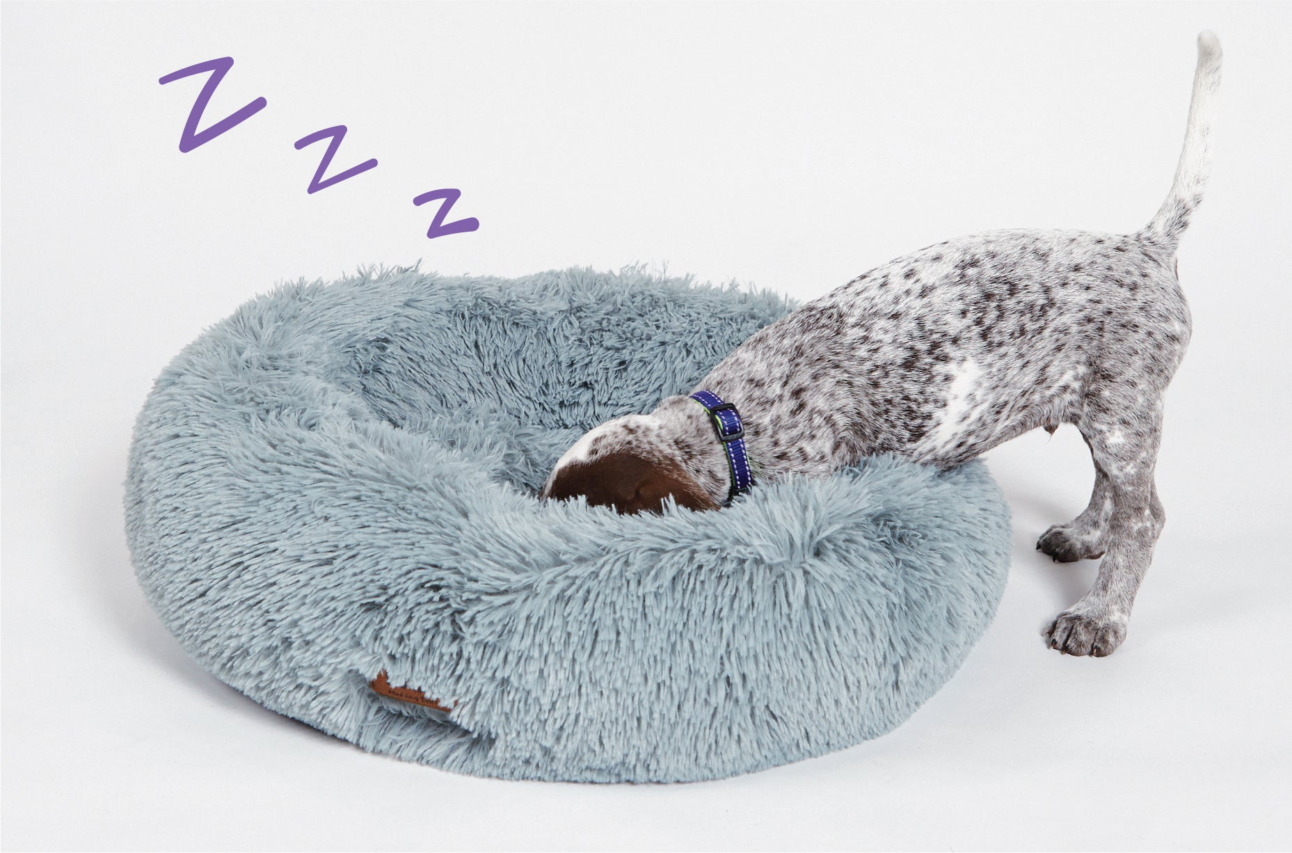 Cute Puppy digging head in bed with wagging tail popping out