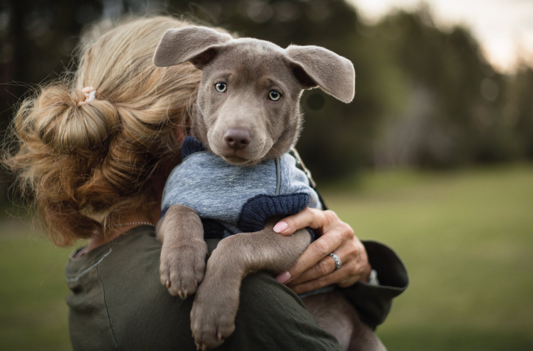 Cute puppy looking into camera whilst being cuddled by owner