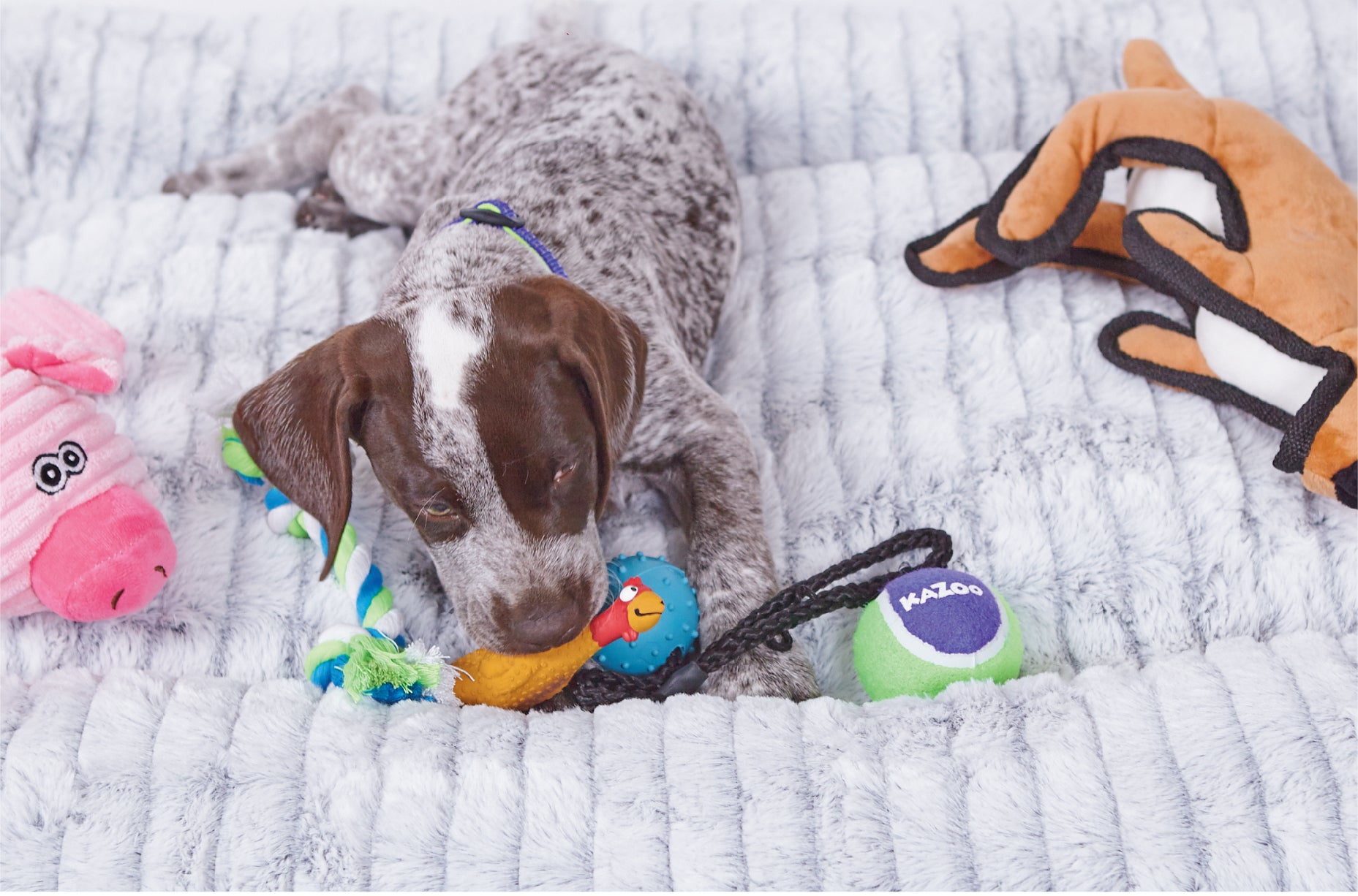 Cute puppy laying on Kazoo dog bed surrounded by puppy toys and chewing a rubber dog toy