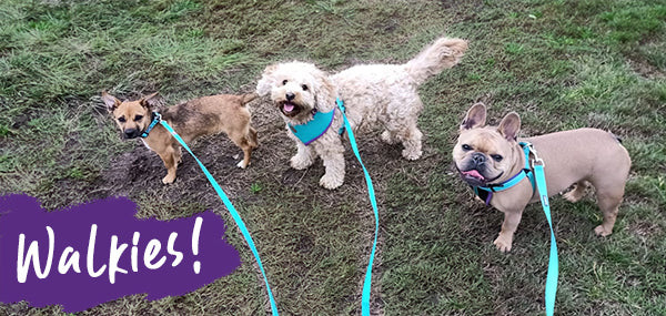 3 dogs being walked on grass with the word Walkies written on top