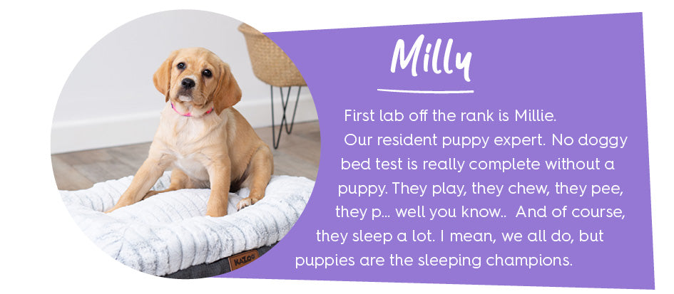 Puppy called Milly sitting on soft dog bed with block of purple text introducing her