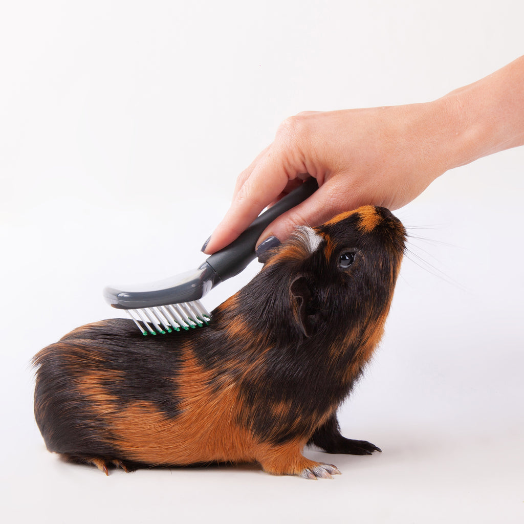 Small Animal Slicker Brush - Kazoo Pet Co