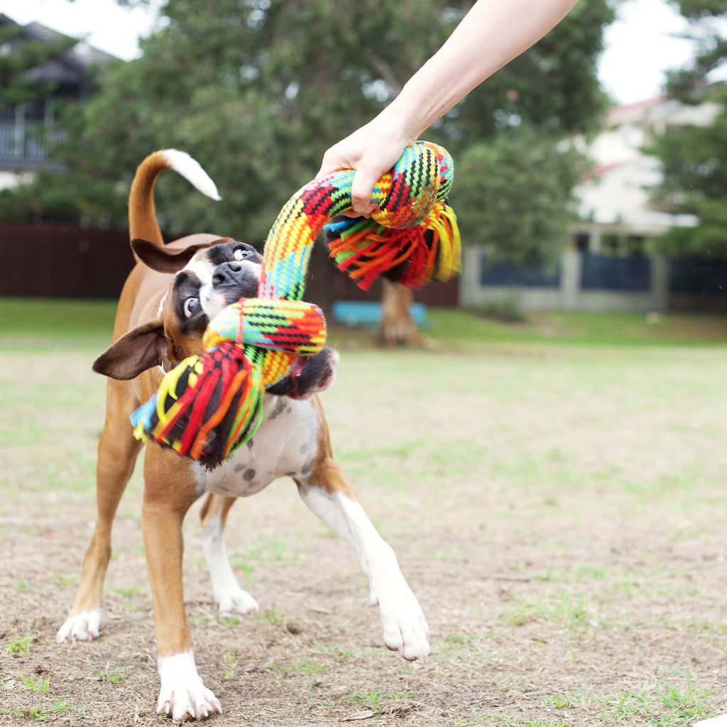 Braided Rope Knot Bone - Kazoo Pet Co