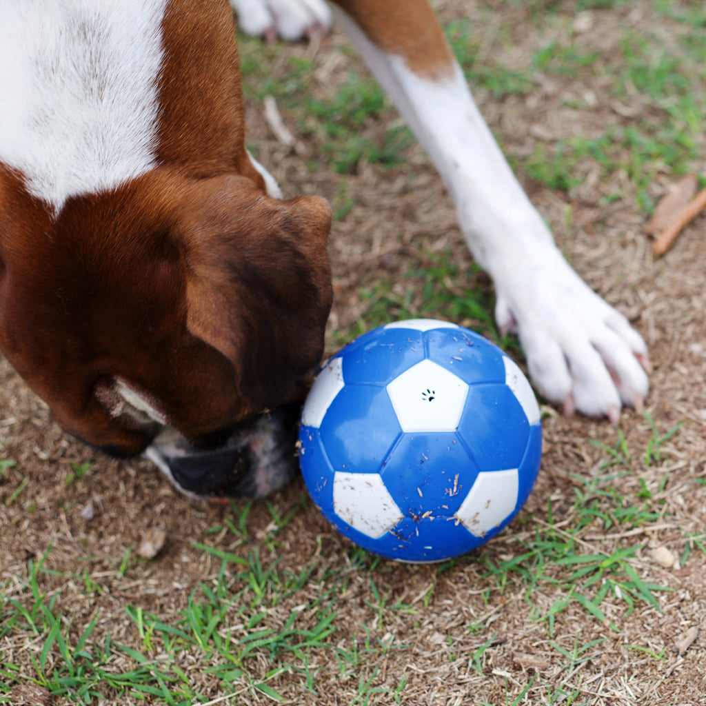 Soccer Treat Ball - Kazoo Pet Co