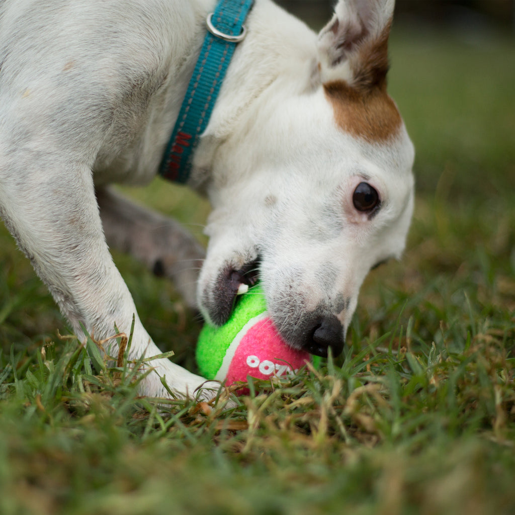 Puncture Proof Tennis Ball - Kazoo Pet Co