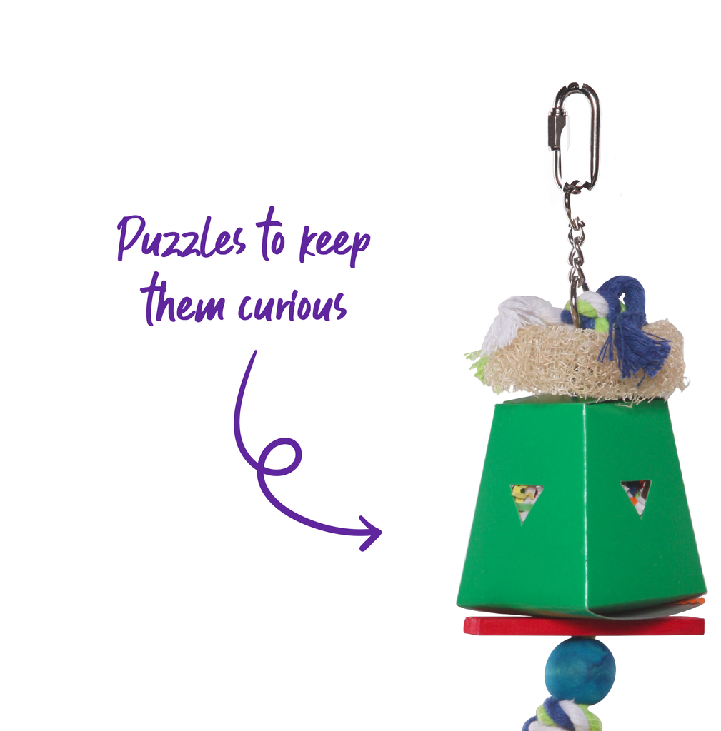 Dual Cardboard Coloured Foraging Box - Kazoo Pet Co
