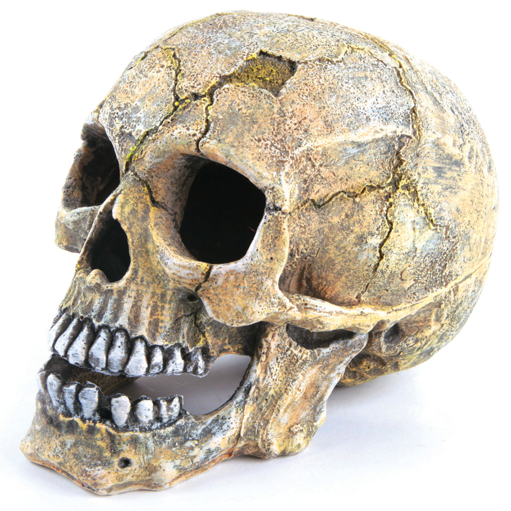 Skull - Large - Kazoo Pet Co