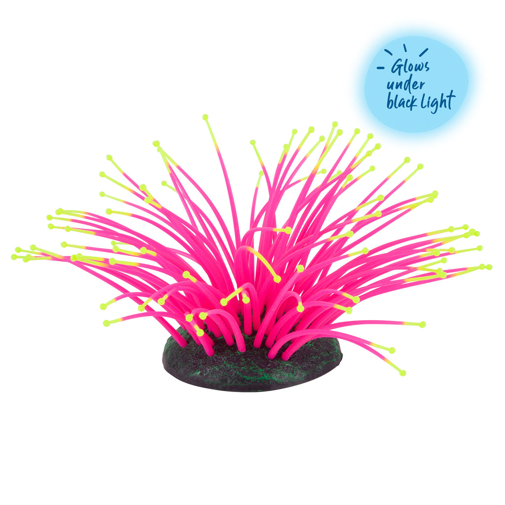 Silicone Sea Anemone Pink - Small - Kazoo Pet Co