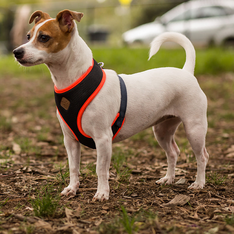 Active Soft Walking Harness - Slate & Orange - Kazoo Pet Co