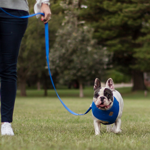 Classic Soft Walking Harness - Blue - Kazoo Pet Co