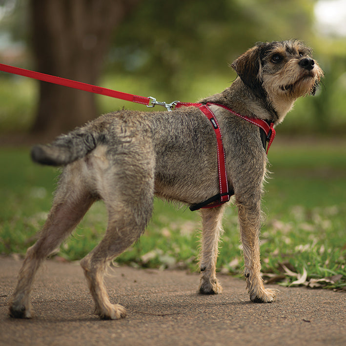 Classic Walking Harness - Red - Kazoo Pet Co