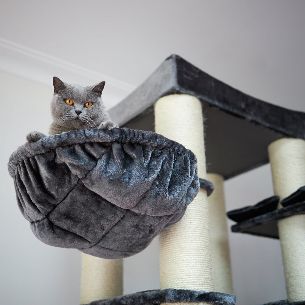 Kitty Tower Playground