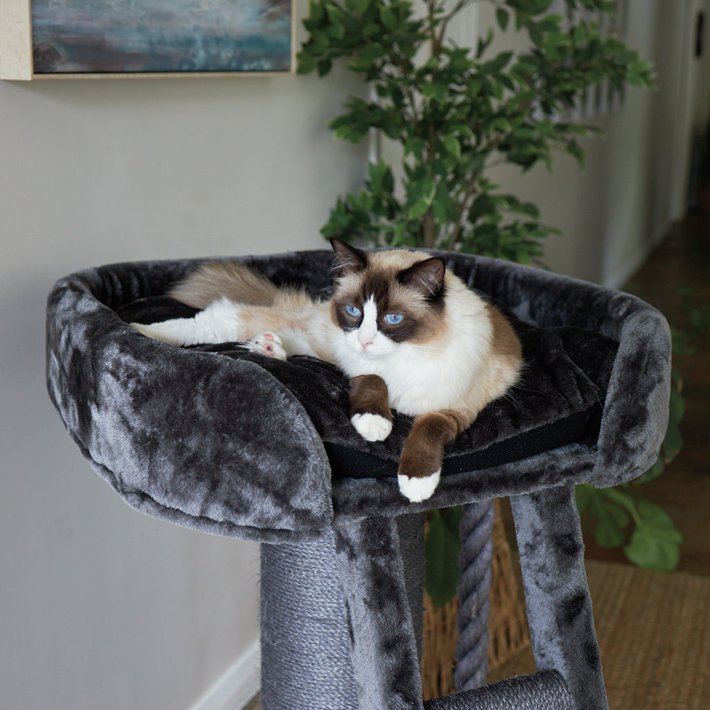 High Bed Scratch Post with Ladder - Charcoal