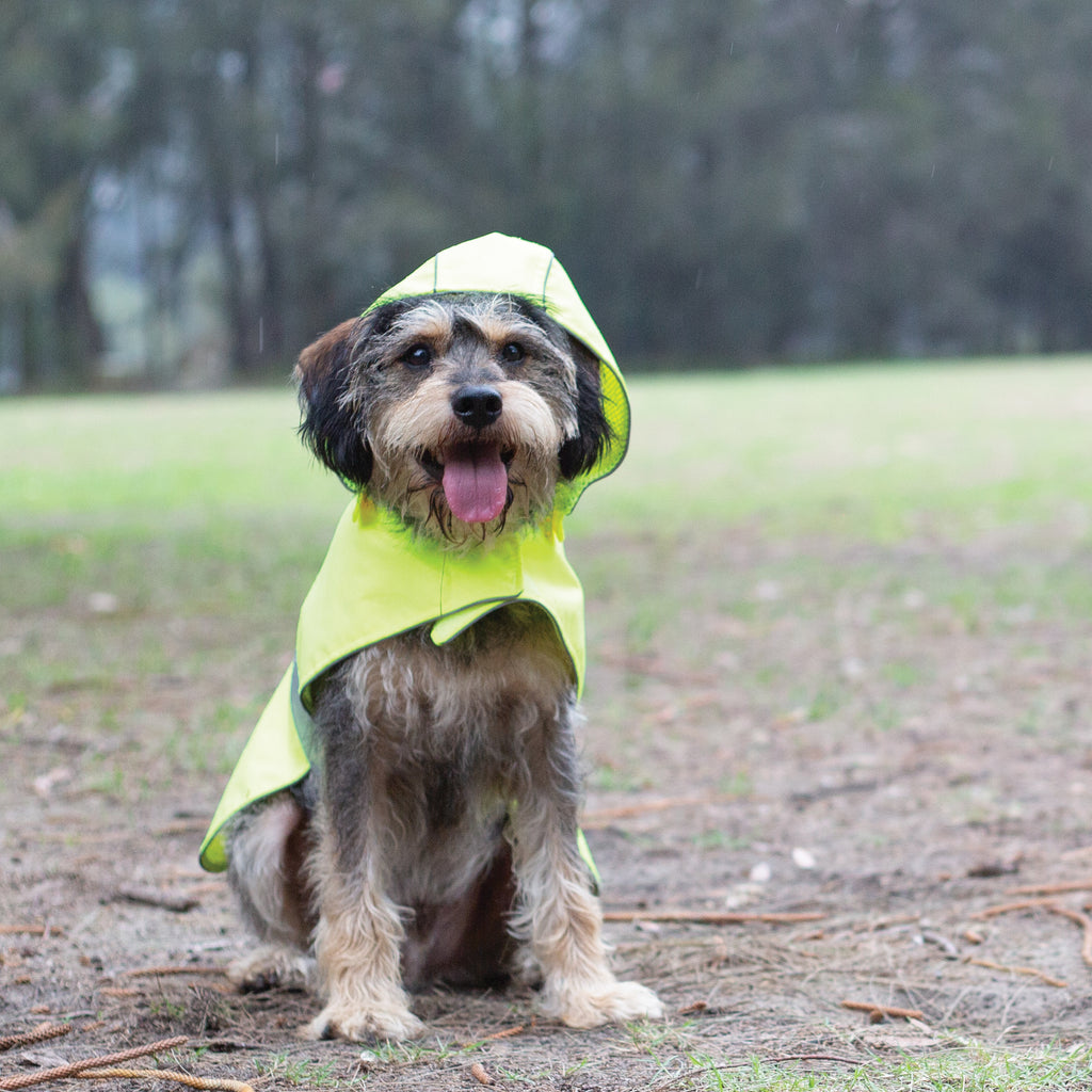 Rainy Days Coat - Yellow - Kazoo Pet Co