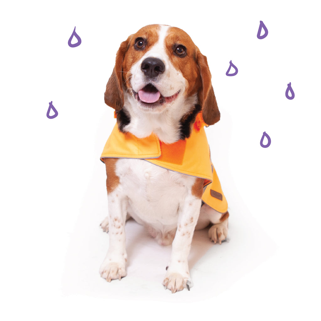 Rainy Days Coat - Orange - Kazoo Pet Co